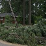 Microburst Aftermath 1