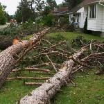 Microburst Aftermath 2