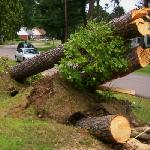 Microburst Aftermath 3