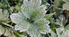Environment Canada issues frost advisory for Regina
