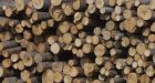 American home builders accuse lumber mills of running a 'cartel' as softwood tariffs trigger inter-industry strife