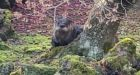 Elusive otter evades authorities at Dr. Sun Yat-Sen Classical Chinese Garden