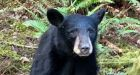Bear euthanized in Oregon after people ignored rules to take selfies with it