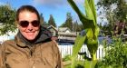 Giant artichoke beats the odds, thrives in Yellowknife garden