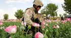 NATO reaches deal for tougher Afghan drug action